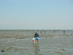 潮干狩り 時期はいつから?沢山採るコツや道具、砂抜きなど一挙ご紹介