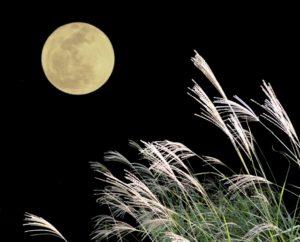 2016年のお月見はいつ?十五夜、十三夜、十日夜の意味や違いは?