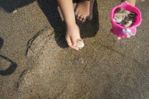 千葉の潮干狩り 2017年の時期、無料と有料の差は?料金はいくら?