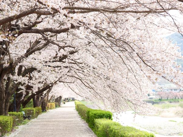 2017年、東京の夜桜!ライトアップもあるおすすめ穴場スポット5選